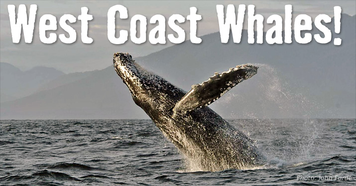 West Coast Whales